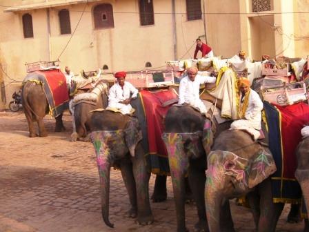 インドの象